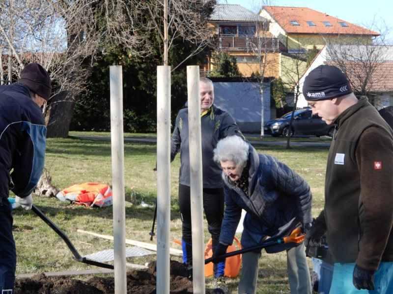 Sázení stromu na počest sv. Klementa Hofbauera