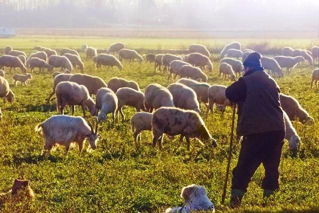 Prohlubujme poznání našeho dobrého pastýře Ježíše